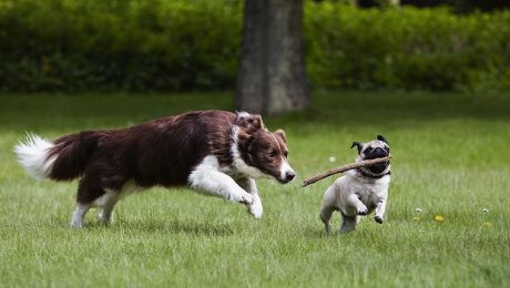 6 Ways To Help Your Dog Make Other Dog Friends
