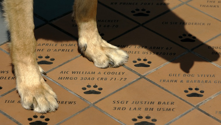 Riverside, Aug. 17, 2007 ? ? ? Small tiles carrying war dogs and their handlers name are installed at the foot of War Dog Memorial located in March Field Air Museum ? March Air Force Base to pay tribute to all the dogs and their handlers who took part in wars (Photo by Irfan Khan/Los Angeles Times via Getty Images)