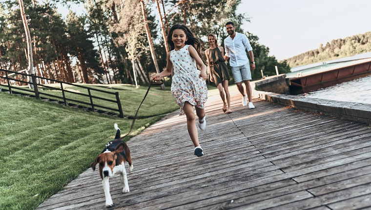 Full length of cute little girl running with dog and smiling while her parents walking behind