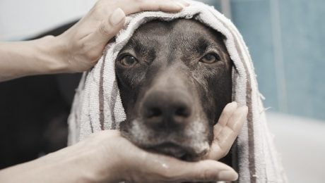 Gold Souls, Gray Faces: 7 Tips For Giving Your Senior Dog A Bath