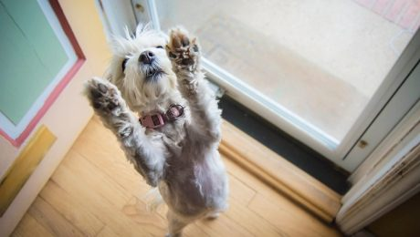 Talking Dogs? Researchers Translate Dog Body Gestures