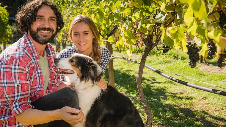 couple kneeling in vineyard petting dog