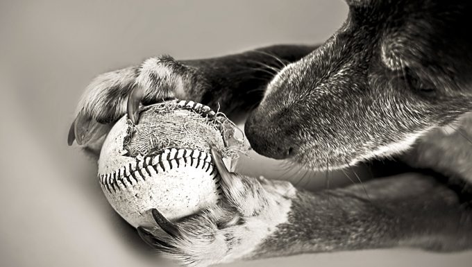 dog chewing old baseball