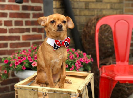 We Get The Scoop On The Dog Cafe Trend With Chateau Le Woof