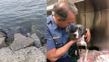 Dog Rescued From Cage Left Near Ocean To Be Drowned By Tide