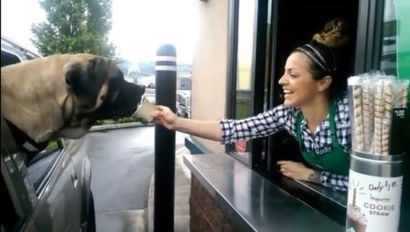 Drive-Thru Day: 9 Videos Of Dogs Getting Treats On The Go