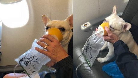 JetBlue Flight Attendants Save Suffocating Dog With Oxygen Mask