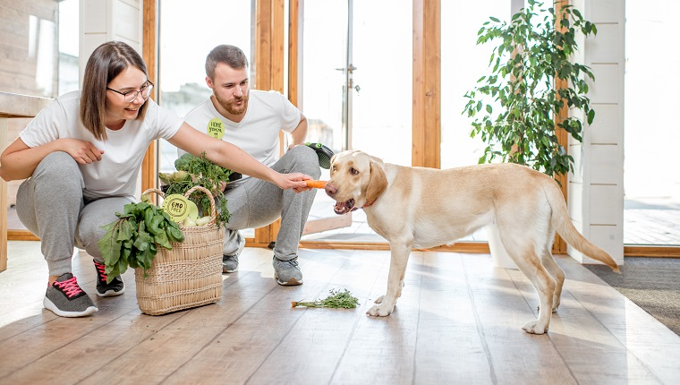 5 Best Dietary Supplements For Your Dog Dogtime