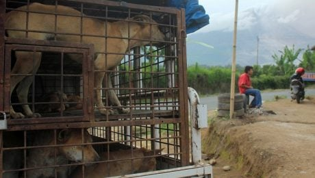 Indonesian Government Will Support Ban On Cat And Dog Meat Trade