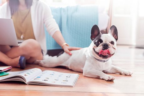 Should More Workplaces Offer Furturnity Leave For New Pet Parents?