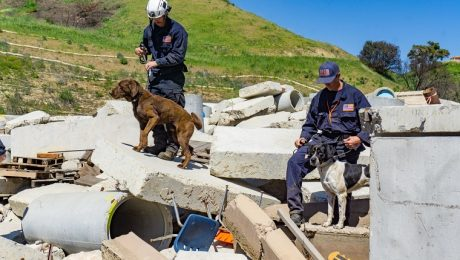 Foundation Gives Rescued Dogs New Lives As Search & Rescue Teams