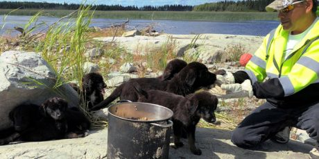 A Tail Of 7 Stranded Puppies Rescued From Small Island