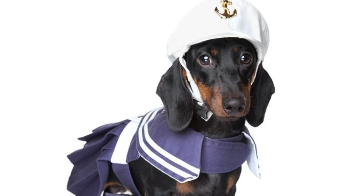 sailor costume dachshund