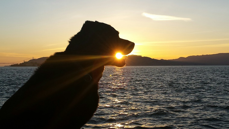 Optical Illusion On Silhouette Dog Eating Sun On Beach Against Sunset