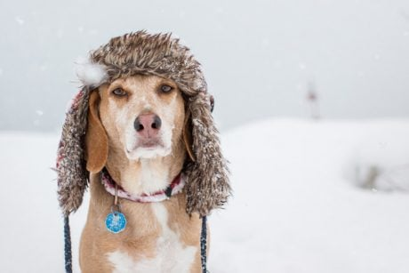Gold Souls, Gray Faces: 5 Ways To Help Senior Dogs In Winter