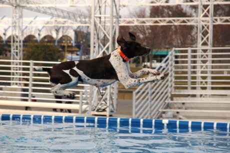What Is Dock Diving Or Dock Jumping For Dogs?