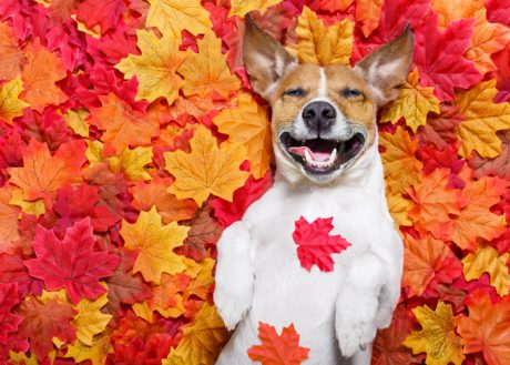30 Dogs Who Are Loving The Fall [PICTURES]