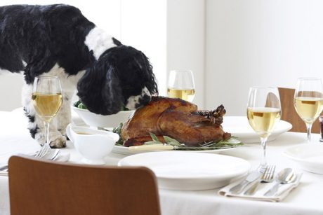 Can Dogs Eat Turkey? Is Turkey Safe For Dogs?
