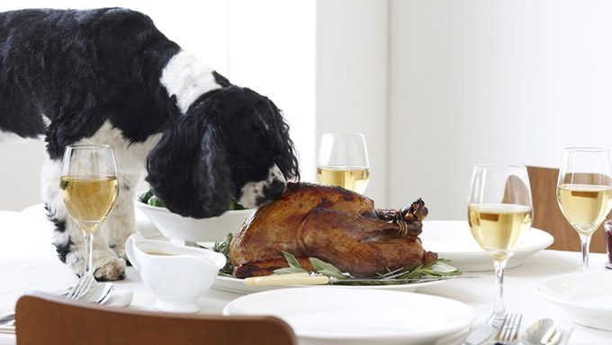 dog sniffing turkey on dinner table