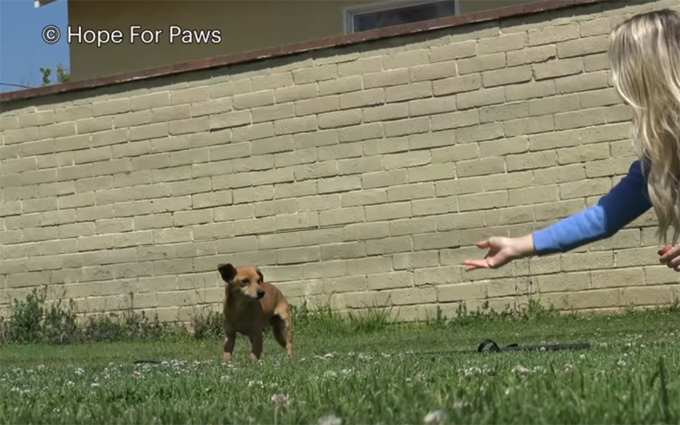 woman reaches for dog