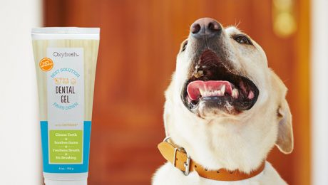 DogTime Review: Oxyfresh Pet Dental Gel