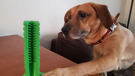DogTime Review: Is Bristly A Toothbrush, A Chew Toy, Or Both?