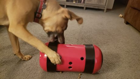 DogTime Review: Pipolino Feeder Turns Meal Time Into Play Time