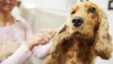 Dog Brushes: Which One Is Best For Your Dog's Coat?