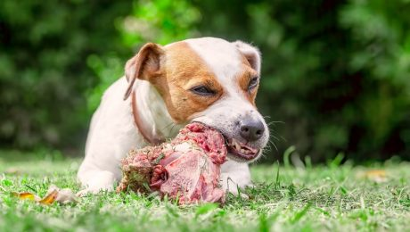 Paleo For Pets: Is A Paleo Diet Right For Your Dog?