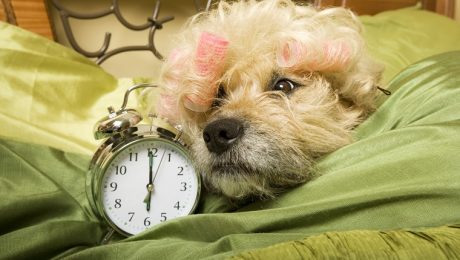 Why The Start Of Daylight Saving Time Drives Your Dog Bonkers