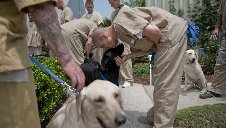 "UNITED STATES - JUNE 30: Inmates prepare to head back to their cells after training the dogs for the day. Training the dogs is akin to a full time job for the men, with a fixed schedule and routine happening everyday. The men must care for, exercise and feed the dogs - giving them a sense of responsibility for living creatures, or as the many of them noted, ""as if they were our kids."""