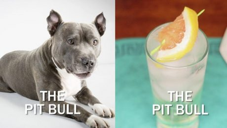 The Pit Bull Cocktail Recipe For Pittie Lovers [VIDEO]