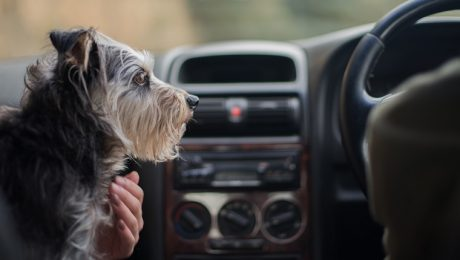 "Will Tesla's ""Dog Mode"" Keep Your Pooch Safer In The Car?"