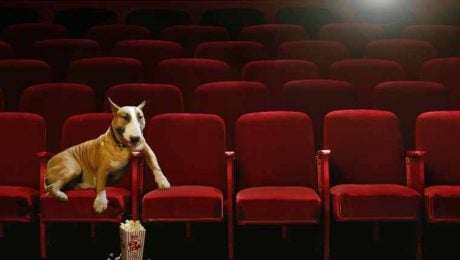 8 Sad-But-Great Dog Movies To Make You Ugly Cry