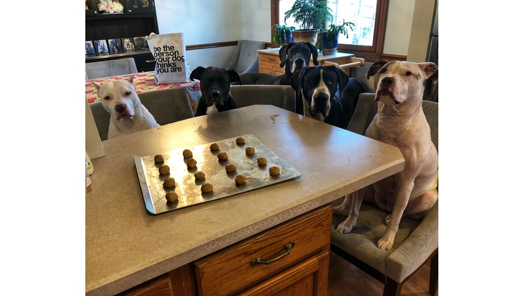 katelyn's dogs enjoying the results of her dog treat recipe