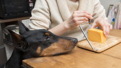 The Cheese Challenge: Is It Okay To Throw Cheese At Your Dog's Face?