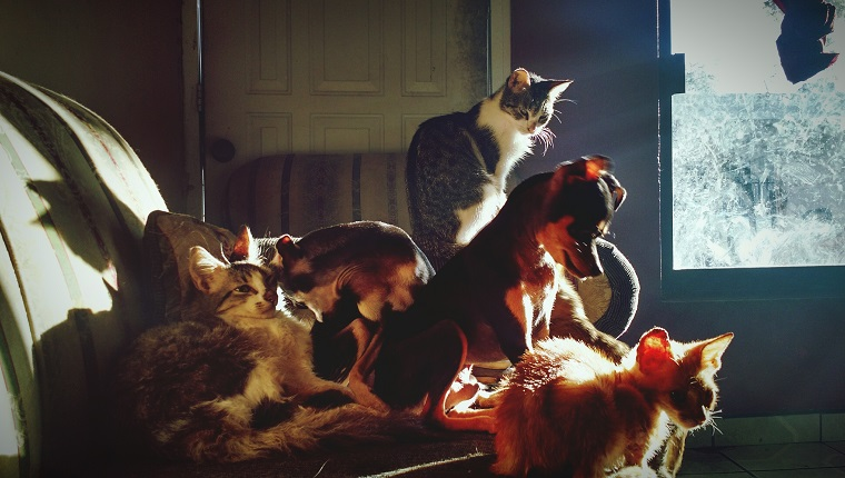 Cats And Dogs On Sofa