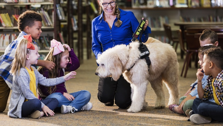 A multi-ethnic group of six boys and girls sitting on the floor of a library, meeting a reading assistance therapy dog, a goldendoodle who is trained to listen to children read. The dog handler is a mature woman in her 50s who is smiling and encouraging the children to interact with the dog. The girl 3rd from the left has down syndrome.