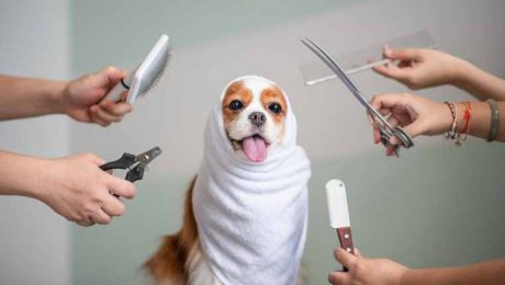 Dog Grooming: Doing It Yourself Vs. Going To A Professional