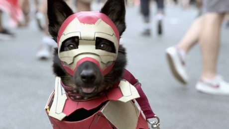 Heroic And Villainous Dog Names Inspired By The Marvel Cinematic Universe
