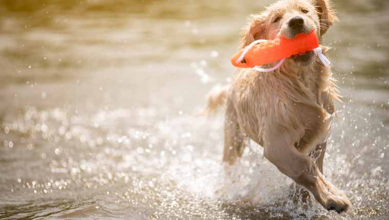 Dog Breed Swimming 1