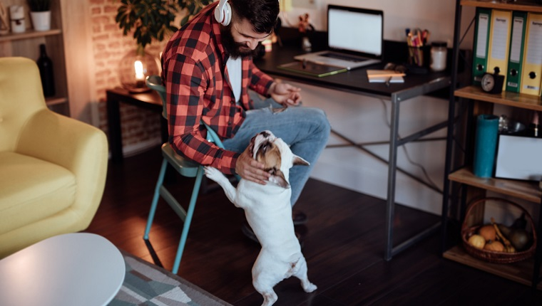 Freelancer working from home and playing with his dog