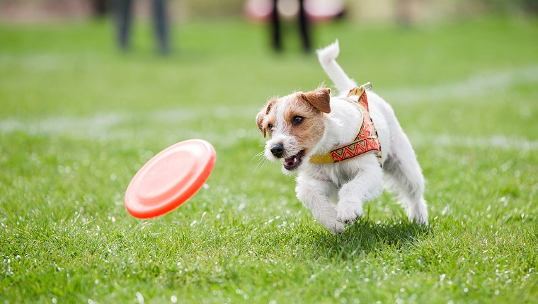 Dog Games: Fun Ways To Play With Any Dog Based On Their Personality