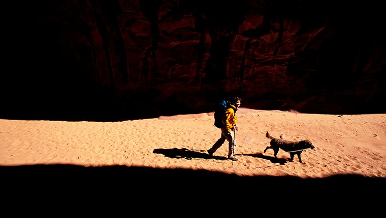 A man and his canine companion walk through a swath of light.