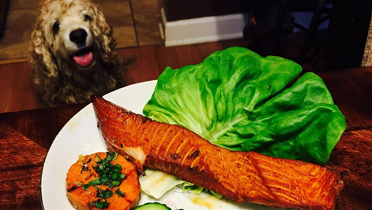 High Angle View Of Salmon In Plate On Table By Dog