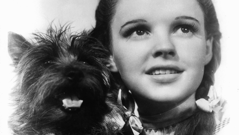 Judy Garland holding her dog Toto in a scene from the film 'The Wizard Of Oz', 1939. (Photo by Metro-Goldwyn-Mayer/Getty Images)