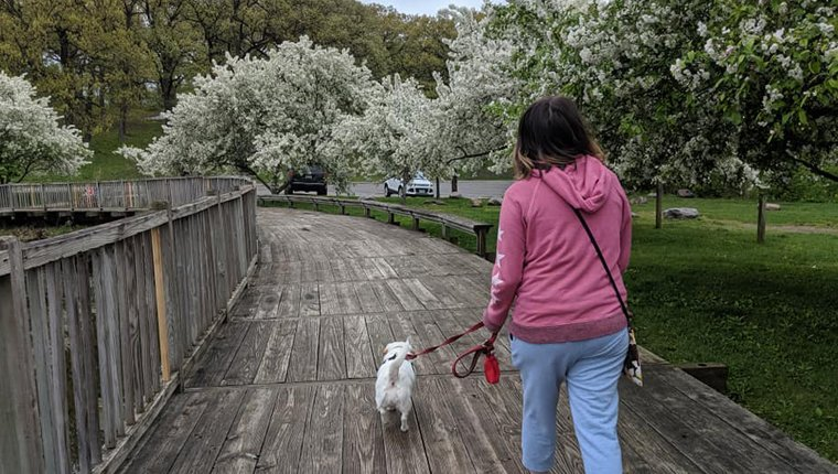woman walking dog on wooden path