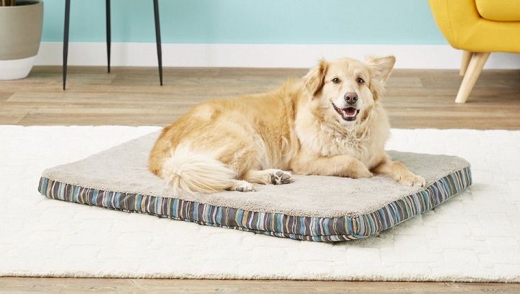 5 Of The Best Dog Beds For Achy Senior Dogs Dogtime