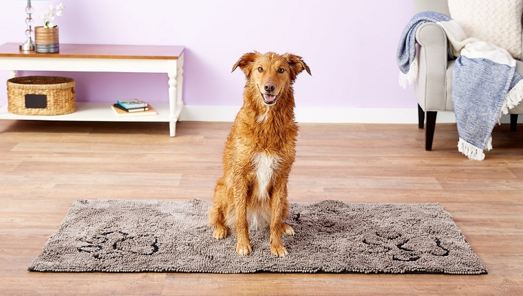 dog on doormat