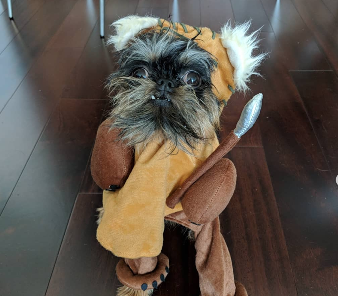 10 Best Halloween Costumes For Small Dogs Pictures Gallery Dogtime